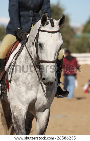 Closeup of a horse and rider warming up in an arena before the start of a morning horse show (shallow focus point on horse's head). - stock photo