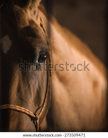 Closeup of a horse head, with eye in the center of composition, in dark stable box - stock photo