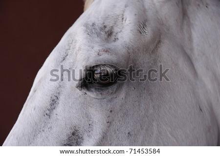 closeup of a horseâ??s eye - stock photo