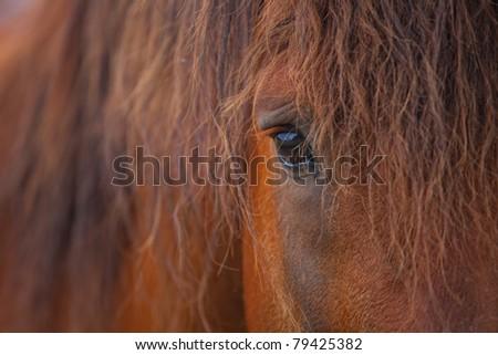 Closeup of a horse's eye - stock photo
