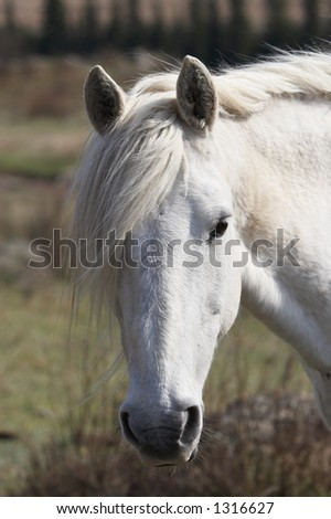 Closeup of a horse's eye. Altay - stock photo