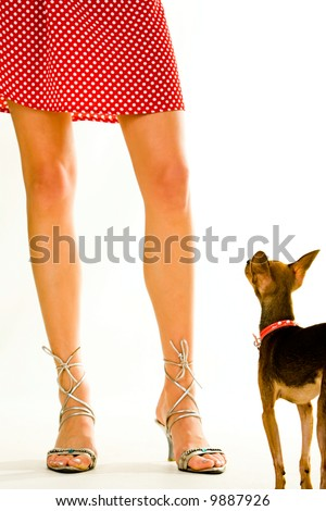 Closeup of a lady's legs wearing high-heeled sandals with her Chihuahua doggy standing near by - stock photo