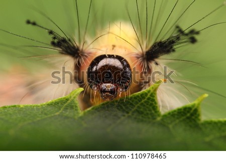 closeup of a larva on a green leaf in the nature - stock photo