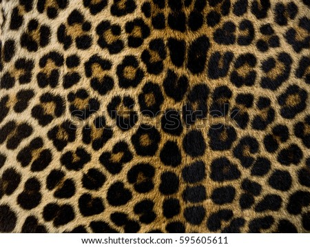 how to draw a leopard skin