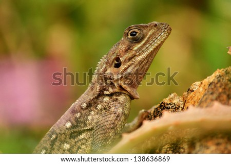 Closeup of a lizard siting on a rock against green background
