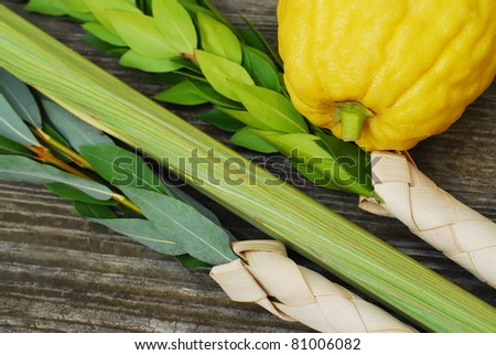 Closeup of a Lulav and Etrog, symbols of the Jewish festival of Sukkot - stock photo