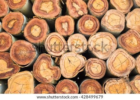 Closeup of a pile cut timber - stock photo