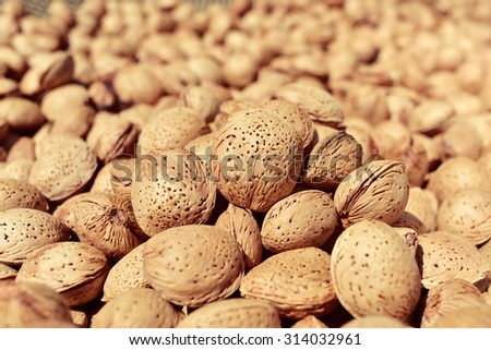 closeup of a pile of almonds in shell after harvesting - stock photo