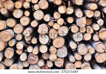 closeup of a pile of cut timber - stock photo