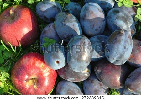 Closeup of a pile of ripe blue plums and red apples on the grass in an orchard, on a sunny day. Natural, healthy, unprocessed, organic produce concept. - stock photo