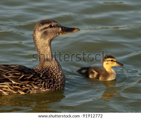 Closeup of a proud mom - stock photo