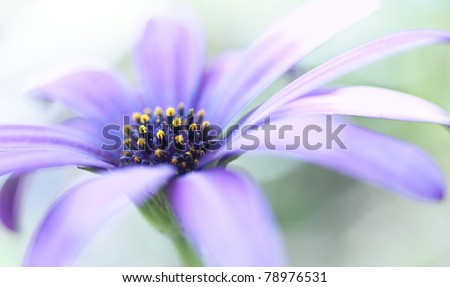 Closeup of a purple flower with a shallow depth of field - stock photo