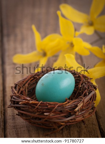Closeup of a Real Robins Egg in a Natural Somewhat Dirty State, Perfect for a Rustic Still Life Image