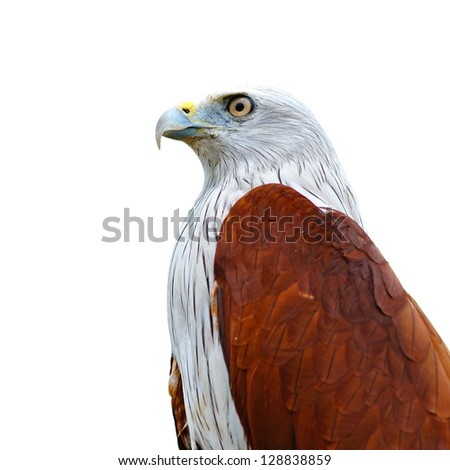 Closeup of a red kite on white background - stock photo