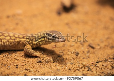 closeup of a reptile