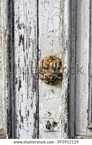closeup of a rusty lion head emblem on a white painted door