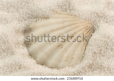 Closeup of a seashell on the white sand