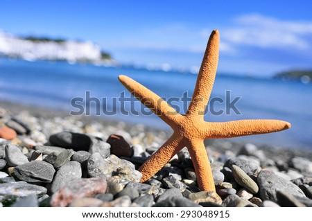 closeup of a seastar in the seashore in a shingle beach - stock photo