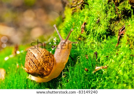 Closeup of a snail in its environment