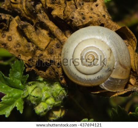 Closeup of a snail on a dry leaf.