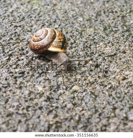 Closeup of a snail with a shell, mollusk - stock photo