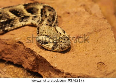 closeup of a snake