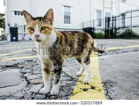 Closeup of a Stray Kitty on a Street of New Orleans, Louisiana - stock photo