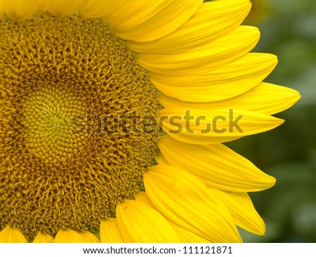 Closeup of a summertime classic flowers showing beautiful patterns - stock photo