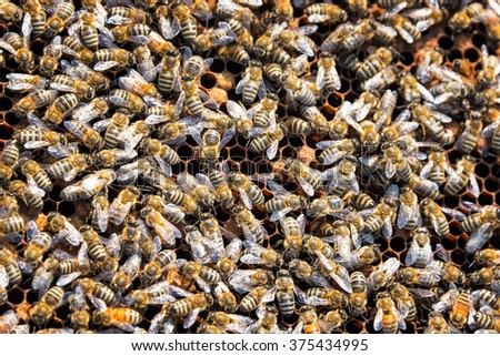 Closeup of a swarm of bees as seen in Buffalo, Wyoming - stock photo