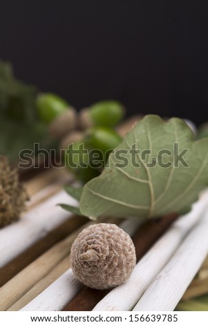 Closeup of a tiny acorn sprigs of brightly colored wooden - stock photo