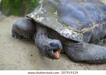 Closeup of a turtle in natural environment