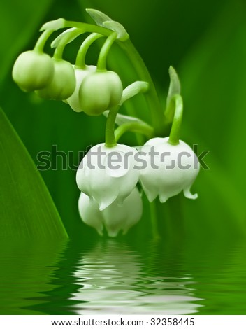 Closeup of a twig of lily of the valley - stock photo