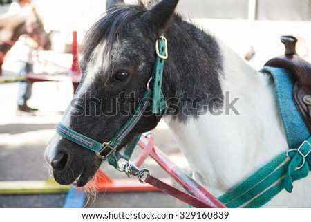 Closeup of a white and gray pony horse. Side view head shot of a white and gray pony ready for riding - stock photo