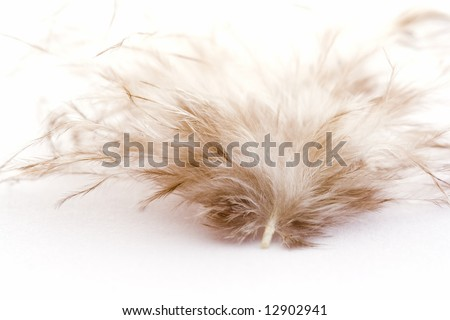 Closeup of a white feather - stock photo