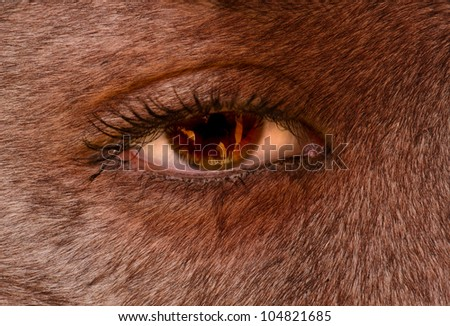 closeup of a Woman's eye with fur on skin as if a wolf woman