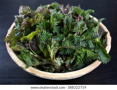 Closeup of a wooden bowl with stinging nettles freshly picked - stock photo