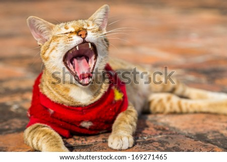 Closeup of a yawning red kitten  - stock photo