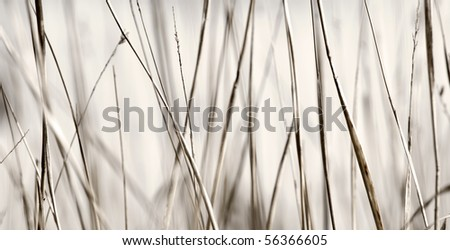 Closeup of Abstract Grasses