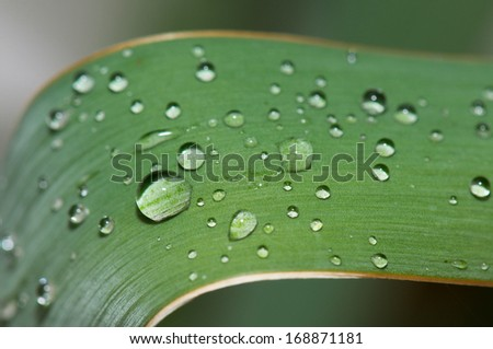 closeup of an agave leaf covered with raindrops - stock photo