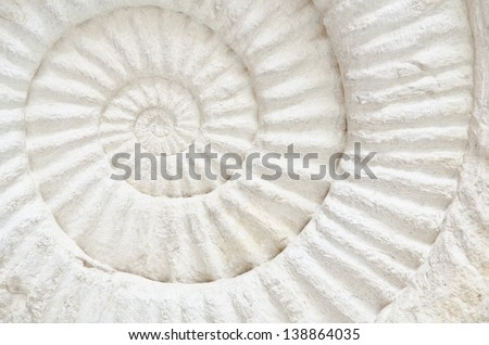 Closeup of an ammonite prehistoric fossil - stock photo