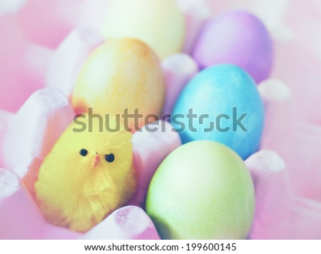 Closeup of an Easter Still Life with a chick and colored eggs in a pink carton.  Short depth of field, horizontal - stock photo