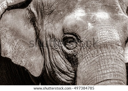 Closeup of an elephant.