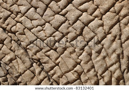 Closeup of an Elephant skin. Can be used for the concept of dry skin. - stock photo