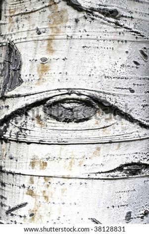 closeup of aspen tree bark - stock photo
