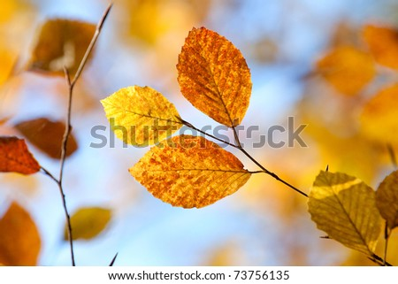 Closeup of autumn leaves against blue sky - stock photo