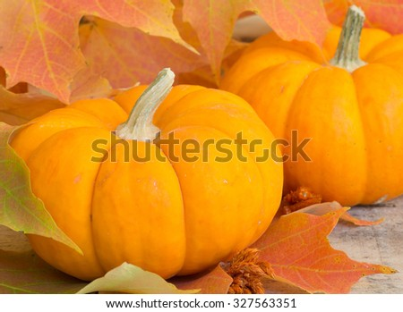 Closeup of autumn pumpkin among colorful leaves - stock photo