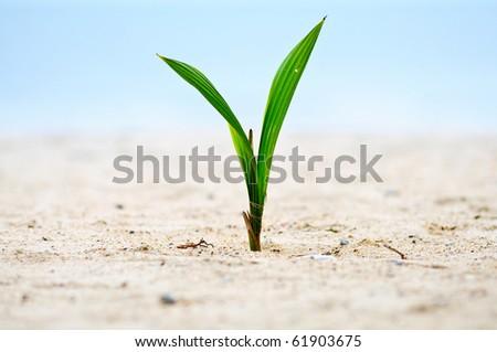 Closeup of baby tree on sand - stock photo