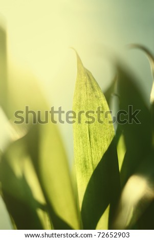 Closeup of backlit green plant leaf with shallow depth of field - stock photo