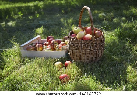 Closeup of basket and crate of apples on grass - stock photo