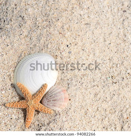 closeup of beach with starfish and shells like summer vacation background - stock photo